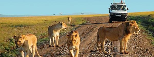 Hire A Safari Driver and Safari Guide on Uganda Safari